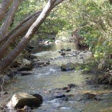 A gorgeous local walk along the Gracetown Creek